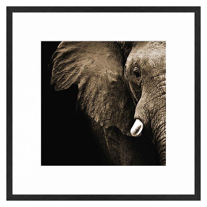 Accent Line Fertigbild Elephant