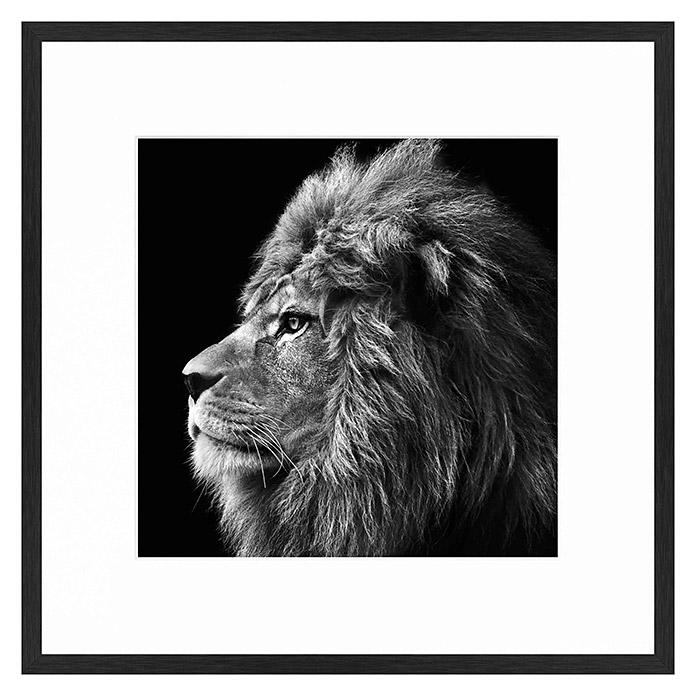 Accent Line image Lion