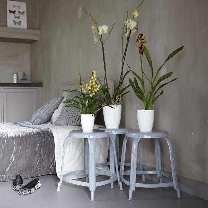 pot pour orchid es ehlo brussels acheter chez bauhaus. Black Bedroom Furniture Sets. Home Design Ideas