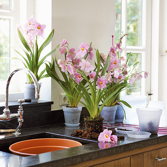 elho Orchideen Kulturtopf
