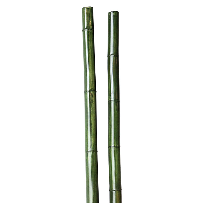 Bambusrohr grün lasiert 260 cm