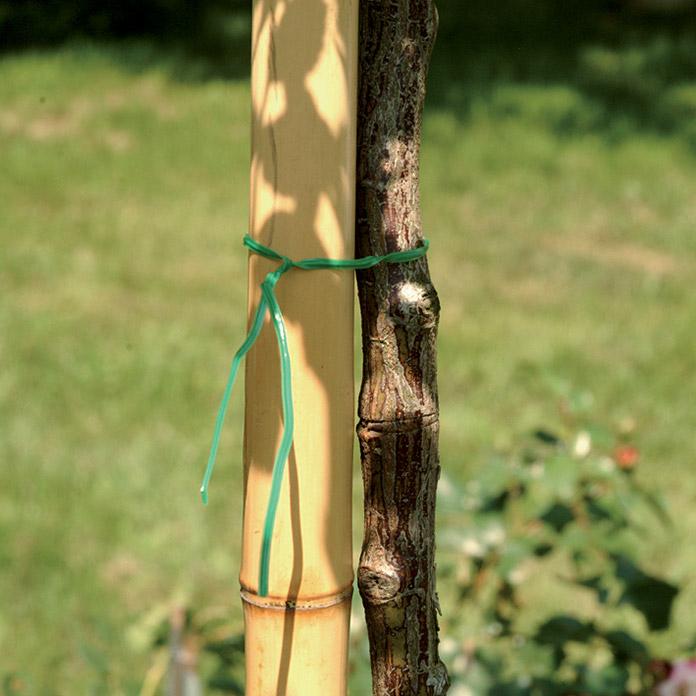 Bambusrohr Bei Bauhaus Kaufen